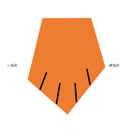 前足模式図