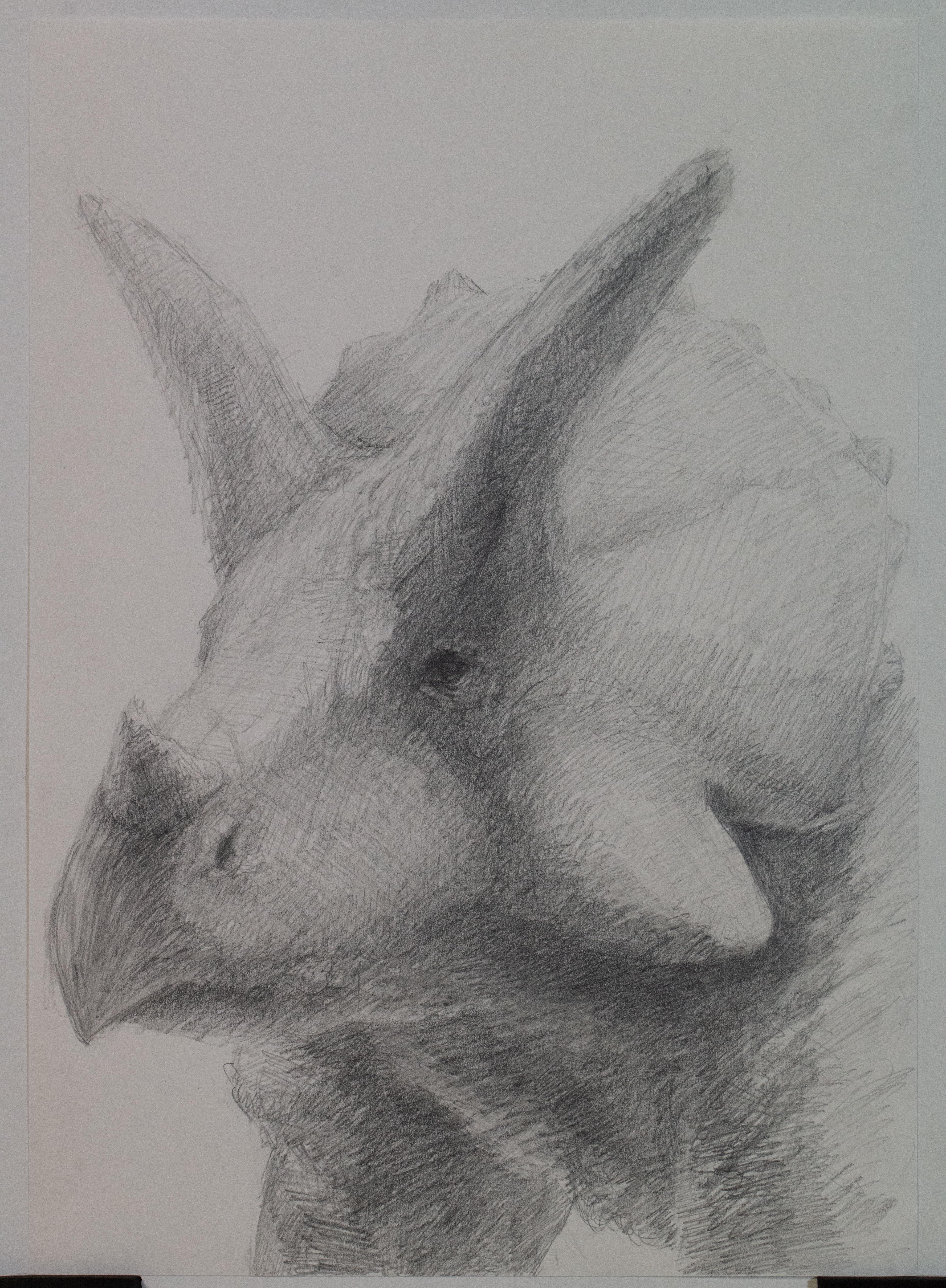 トリケラトプス鉛筆デッサン
