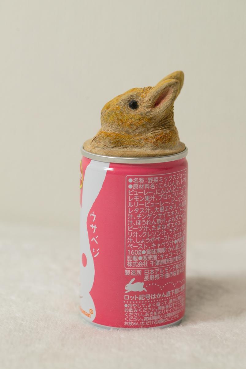 ウサベジ缶から顔を出すうさちゃん