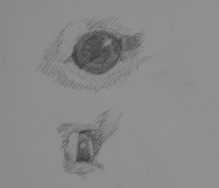 うさちゃんの目