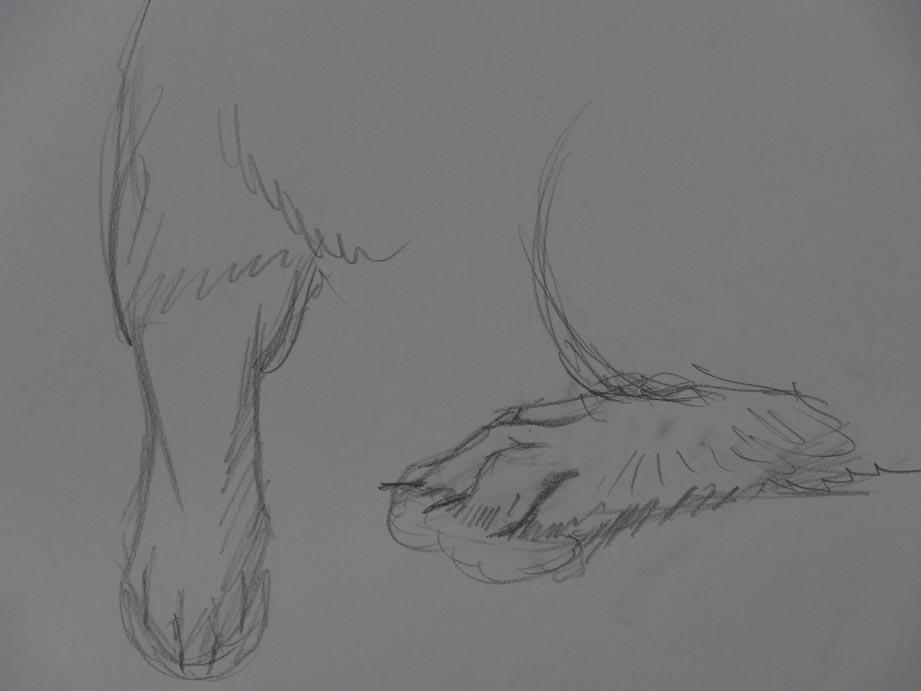 うさちゃんの前足
